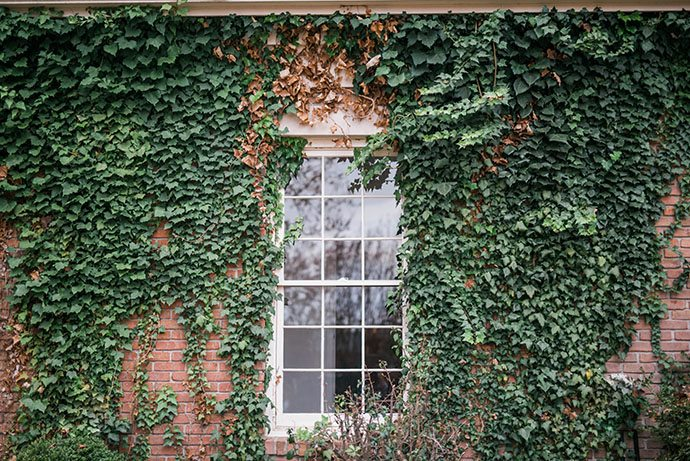ivy-covered brick