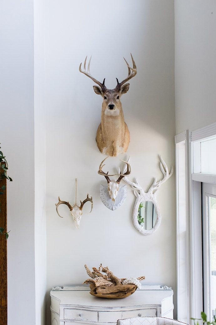 Decorative antler collection